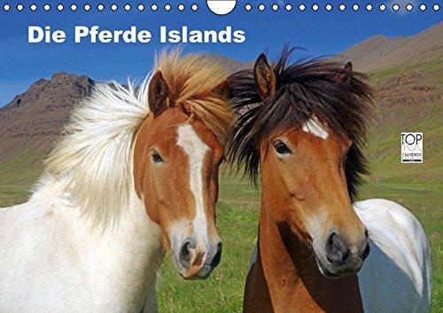 Die Pferde Islands (Wandkalender 2017 DIN A4 quer): Die wunderbaren Islandpferde werden in verschiedenen Jahreszeiten von ihrer schönsten Seite präsentiert (Monatskalender, 14 Seiten) (CALVENDO Tiere)