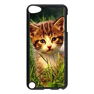 iPhone 5,5S Case,Little Cat In Grassland Hard Shell Back Case for Black iPhone 5,5S Okaycosama299994