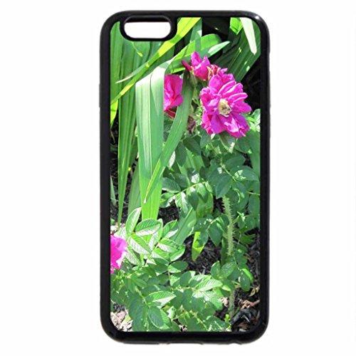 iPhone 6S / iPhone 6 Case (Black) Alberta Wild Roses in my garden