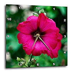 3dRose Alexis Photography - Flowers Malva Mallow - Elegant Dark red Mallow, malvaceae, Flower, Dark Green Background - 10x10 Wall Clock (DPP_319945_1)