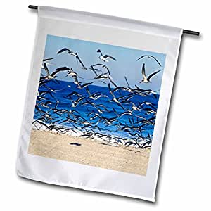 Danita Delimont - Birds - Sea Gull birds on American Beach, Jacksonville, FL - US10 GJO0229 - Greg Johnston - 12 x 18 inch Garden Flag (fl_89151_1)