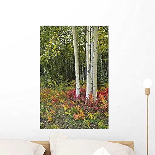 (Wallmonkeys Colorful View of Aspen Tree Trunks and Fall Foliage Wall Decal Peel and Stick Graphic WM180057 (24 in H x 16 in W))