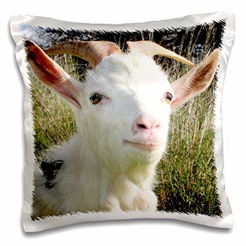 Farmyard Animals - 5