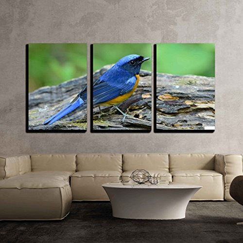 wall26 - 3 Piece Canvas Wall Art - beautiful male Rufous-bellied Niltava (Niltava sundara) in Thai forest - Modern Home Decor Stretched and Framed Ready to Hang - 16''x24''x3 Panels by wall26