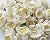 40 Pcs Cherry Blossom Ivory Mulberry Paper Flower 25 mm Scrapbooking Wedding Doll House Supplies Card Project