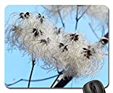 Mouse Pads - Clematis Vitalba Pods Soft Fluffy Seeds Liane 453