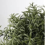 Ikea-Artificial-Potted-Plant-Rosemary-95