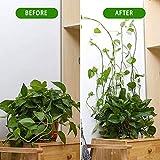 Plant Vine Climbing Wall Fixture Clips