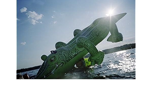 Un hinchable cocodrilo en el sol. Suecia: Amazon.es ...