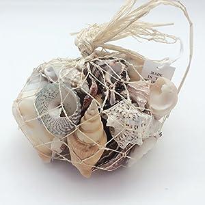 PEPPERLONELY Sea Shells Mixed Beach Seashells, Various Size 56
