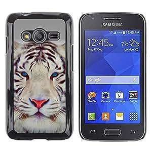 Be Good Phone Accessory // Dura Cáscara cubierta Protectora Caso Carcasa Funda de Protección para Samsung Galaxy Ace 4 G313 SM-G313F // Tiger Cute Eyes Feline Big Cat Winter