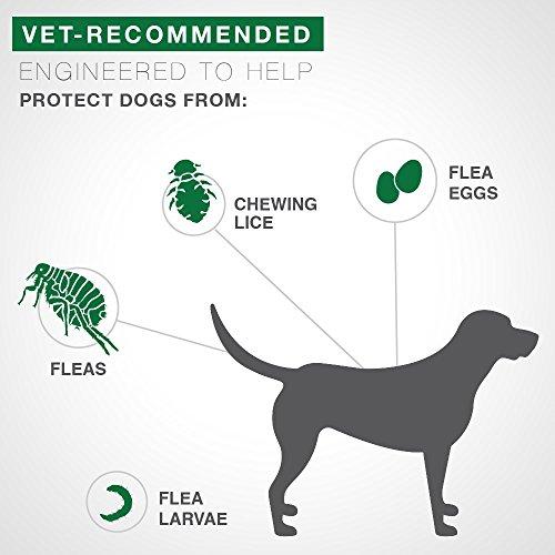 Bayer Advantage II Topical Flea Treatment Dogs by Bayer Animal Health (Image #2)