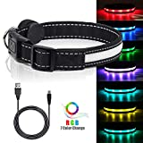 """LED Safety Dog Collar - USB Rechargeable Light Up Pet Collar Adjustable Nylon Pet Collar with Metal Buckle Water Resistant Flashing Light- Makes Your Dog Visible, Safe & Seen (L(19-24"""" inch/49-61cm))"""