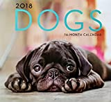 2018 Wall Calendar Dogs and Cute Puppies 16 Months 12 in.