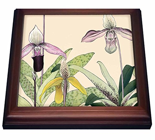 "3dRose trv_175433_1 Pink and Yellow Cypripedium Orchids or Lady Slipper Orchids-Trivet with Ceramic Tile, 8"" x 8"", Brown"
