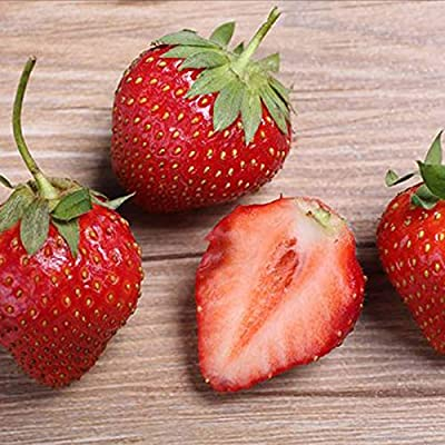 100 Seeds/Pack, Sweet Yellow Alpine Strawberry Seed Non-GMO Organic Fruit : Garden & Outdoor