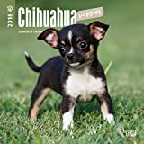 Chihuahua Puppies 2018 7 x 7 Inch Monthly Mini Wall Calendar, Animals Small Dog Breeds Puppies