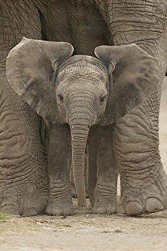 Pyramid America Big Ears Elephant and Baby Photography Poste