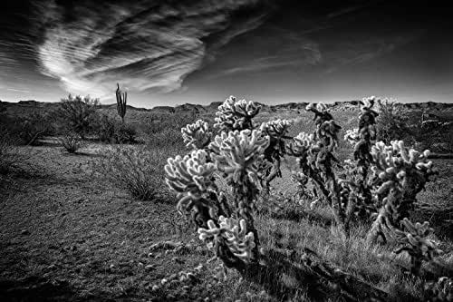 Amazon.com: Landscape Photography, Arizona, Desert