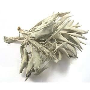 Bulk Herbs: White Sage (Wild Harvested)