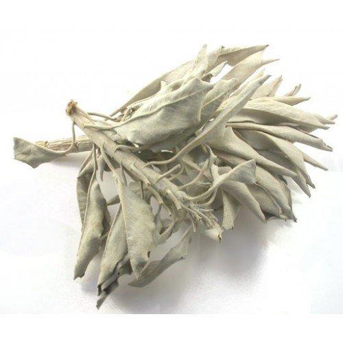 bulk-herbs-white-sage-wild-harvested