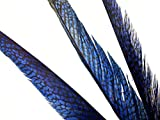 Natural Sapphire Mountain Pheasant Feathers 18-20inch-45-50cm 100 Pcs