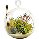 Air Plant Terrarium Kit with 4'' Round Glass/Nautical Countryside