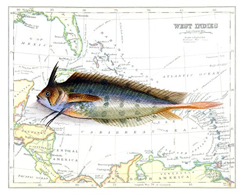 Beautiful 8x10 Weed Fish Print Overlaid on a 19th Century Reproduction Map of the Caribbean West Indies. Size: 8x10 Inches (Puff2Map810)