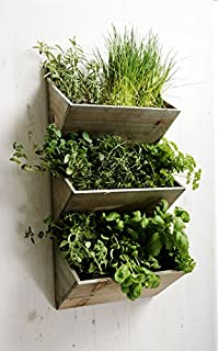 Primrose Shabby Chic Large Wall Mountable Herb Planter Kit With Seeds