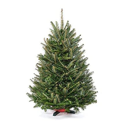 tabletop premium grade fresh christmas tree stand included - Real Christmas Tree Decorated