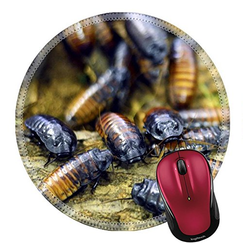 Price comparison product image Liili Round Mouse Pad Natural Rubber Mousepad IMAGE ID: 26931844 A large number of colorful beetles together