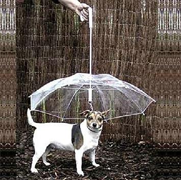 Paraguas para perro con soporte de correa