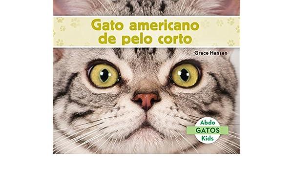 Gato Americano de Pelo Corto American Shorthair Cats Spanish Version Gatos/ Cats: Amazon.es: Grace Hansen: Libros