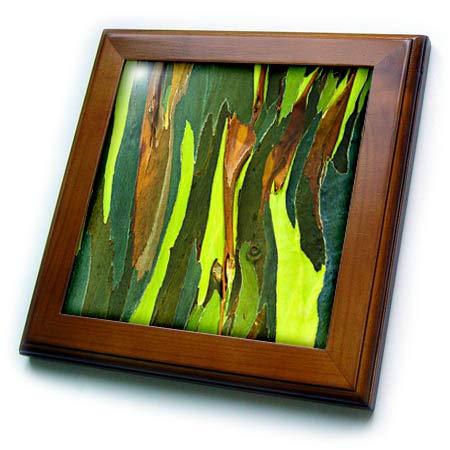 - 3dRose Danita Delimont - Natural Patterns - Rainbow Eucalyptus bark, Island of Kauai, Hawaii, USA. - 8x8 Framed Tile (ft_314813_1)