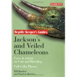 Jackson's and Veiled Chameleons: Facts & Advice on Care and Breeding