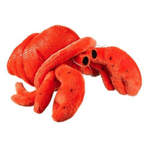 Hermit Crab 6 by Wild Life Artist by Wildlife Artists