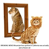 What Is the Difference Between King and California King SunGrow Cat Lion Mane - BREAKING NEWS! Mountain lion spotted in California was actually just a house cat.