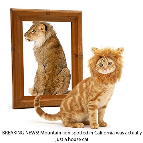 [SunGrow Cat Lion Mane - BREAKING NEWS! Mountain lion spotted in California was actually just a house] (Beautiful Witch Costumes)