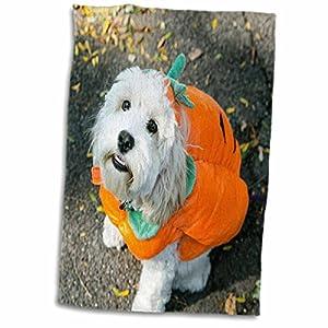 3dRose Danita Delimont - Halloween - Pet Halloween contest at Thompkins Square Park, New York City. - 12x18 Hand Towel (twl_231348_1)