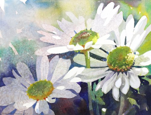 shasta-daisy-daydream-giclee-print-of-white-daisies-in-the-sun-15-x-19-inches