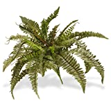 National Tree 26 Inch Garden Accents Green Boston Fern Bush (GABF30-26G)