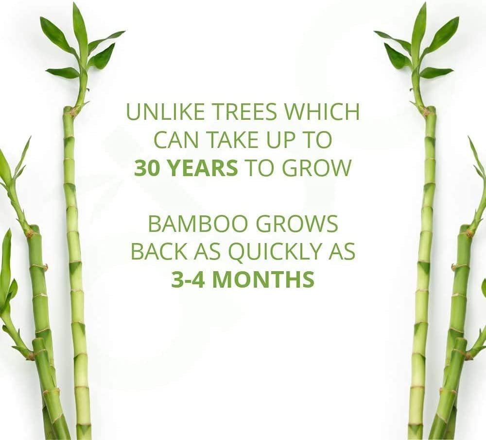Caboo Tree Free Bamboo Paper Towels, 6 Rolls, Earth Friendly Sustainable Kitchen Paper Towels with Strong 2 Ply Sheets: Health & Personal Care