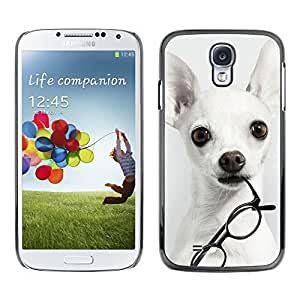 Hot Style Cell Phone PC Hard Case Cover // M00100457 chihuahuas animals // Samsung Galaxy S4 i9500