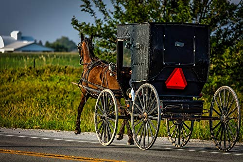 (Home Comforts Laminated Poster Iowa Carriage Buggy Amish Horse Vintage Vivid Imagery Poster Print 24 x 36)