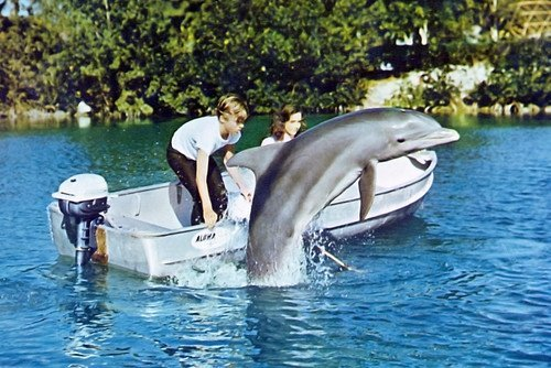 Flipper Dolphin Tv Rare Photo 11x17 Mini Poster