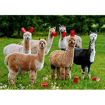 Alpacas With Red Cups Avanti Funny Birthday Card