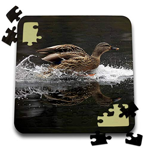 3dRose Stamp City - Birds - Photograph of a Female Mallard Duck Coming in for a Graceful Landing. - 10x10 Inch Puzzle (pzl_292968_2) ()