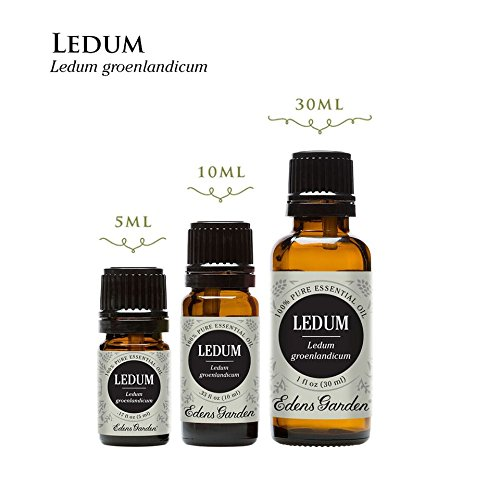 Ledum 100% Pure Therapeutic Grade Essential Oil by Edens Garden- 30 ml