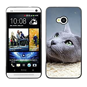Hot Style Cell Phone PC Hard Case Cover // M00100616 animals cat // HTC One M7