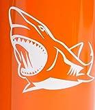 ComputerGear 3D Shark Backpack Lunchbox Lunch Box Water Bottle Set